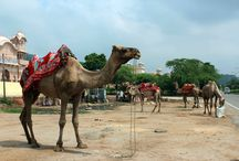 Jaipur  / Explore the Pink City of Jaipur