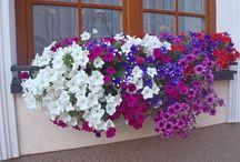 Truhliky s květinami