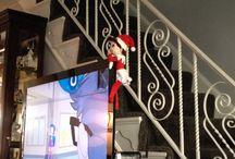 Elf On The Shelf 2013 / by Denise Grubb
