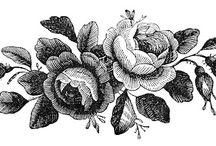 Wild rose graphics
