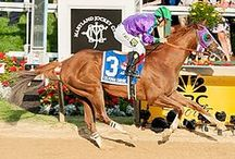 "California Chrome / California Chrome: an American Thoroughbred racehorse bred in California. Winner: 2014 Kentucky Derby & 2014 Preakness Stakes.  The chestnut-colored horse was named for his flashy white markings, called ""chrome"" in the world of horse aficionados.   He developed a dedicated fan base, known as the ""Chromies,"" and he began to be called ""the people's horse."" He will race in the Belmont Stakes on June 7 and could become the first Triple Crown winner since 1978."
