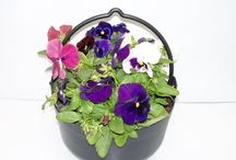 AUTUMN PLANTERS 2014 /2015 / Autumn Planters and Hanging Baskets 2014