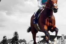 The best race horses in the world