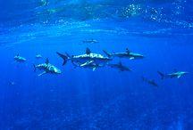 Diving / Scuba Diving