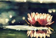Photographs: Flora