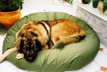 Leonberger / Dedicated to making Leonberger comfortable