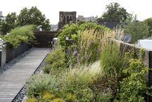 Roof garden/urban farm