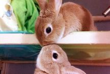 Bunny Love / Rabbits are amazing animals with great personalities. Not to mention that they are incredibly cute and sweet. / by Animal Muse: Cathy Currea
