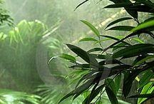 Rainforest ambassador
