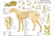 ANIMALS ANATOMY