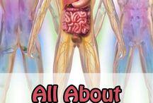 Атлас органов