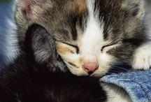 Cats. / Gatos.