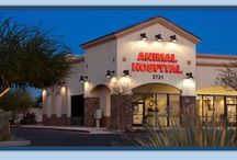 Animal Hospitals Arizona / We are proud members of Arizona Healthy Pet Hospitals. A premier hospital group dedicated to caring for pet-family members with tenderness and compassion. We are committed to providing the best in medical care in order to prevent illness and pain and to assist you in giving your pet-family member a happy and healthy life.  We provide a complete range of pet health care services.