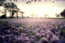 photography / amazing picture of spring, I've been waiting for Spring for quite some time now and it needs to get here soon! / by andrea