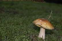 Mushrooms / Fungi / Images and information about mykology, mushrooms and fungi.