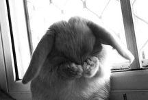 PETS: bunnies