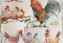 Rosters and Chickens,høner og haner, rooster / Høner ,hens,chicken ,haner