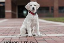 Gift of Honor / Honor A Friend, whether two-legged or four. Memorialize a loved one. Thank a veterinarian or caretaker. Celebrate a birthday, anniversary or other milestone.   Bricks and pavers are available in the Walk of Honor. Bricks – Gift of $150 or more.  Pavers – Gift of $500 or more   For more information, please contact:    919-513-6660       cvmfoundation@ncsu.edu       www.cvm.ncsu.edu/ncvmf