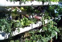 Aqua/Hydroponics/Greenhouse / Everything from aquaponic plans to conventional garden insect control.