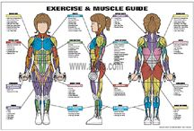 Fitness Poster / Fitness