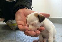 Dogs / Piccoli cuccioli