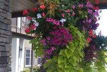 Gardens/ outdoors