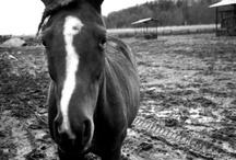- horsey -