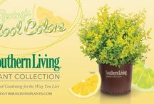Spring's Cool Colors / Spring's Cool Colors / by Southern Living Plant Collection