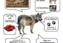 Recherche sur un animal