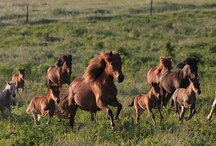Boekenreeks Het IJslands Paard / Omslagfoto Facebookpagina 'Boekenreeks Het IJslands Paard'.
