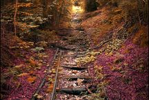 Rail in the  Fall
