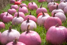 A Passion for Pink (Continued!) / by Kathy Leonhardt