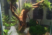 Nano Tank / Shrimp ^^