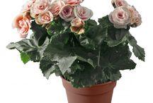 Plantes / Retrouvez toutes nos plantes décoratives que vous pouvez commander sur notre site / by Des Fleurs Pour Tous