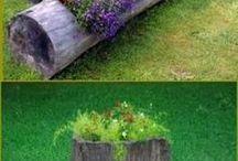Garden ang Plants