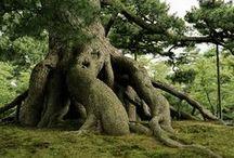 Trees & House