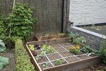 Jardin - Potager en carrés