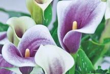 Flowers, Landscape, Gardens / by Colleen Brailsford