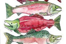 Baliklar  deniz ürünleri