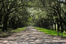 Let's move to Savannah / by Lauren Mize