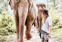 elefantes ;  elephants ;