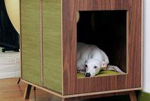 Pet Accessories / by Mariah Arnett