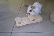 bunny toys / diy toys for bunnys