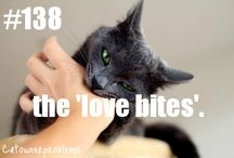 O. Diaries of a crazy cat lady