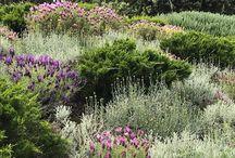 KCHDL_přírodní zahrada ve městě / bylinky, drenáž, pískoviště, odclonit dům, pěstování drobného ovoce, využít žulové kostky, minimum dlážděných ploch, bylinkový záhon zakomponovaný do zahrady, odstínit rohové okno, vyhnout se geometrickým rešením, obě varianty slunce i stín, vodní prvek - pítko, využití staré lavičky, vytvoření malých koutků, uskladnit dřevo do krbu