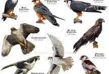 Tattoo Falcon