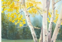 Birch trees <3