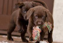 Cute Dogs / They are soooo cute