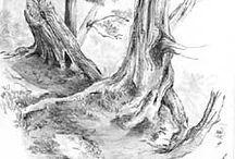 drzewa obrazy