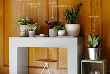 Indoor and Outdoor Decorating with plants and succulents